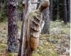 Bugailiskis skulpturos gamtoje 2