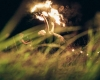 yaga-skubios-goodlife-photography-35-K100