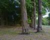 19-nuotr.-Senieji-parko-medžiai.-1200