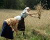 14. Lynežerio kaimo rugių pjovėjos... Pjauti pjautuvais buvo moterų darbas, o kirsti dalge - vyrų...-1200