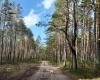 Miško keliukas į kaimą.-1200