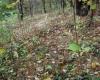 Pilkosios tauriabudės augimvietė.