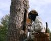 Nematerialaus kultūros paveldo vertybių sąvade - drevinės bitininkystės tradicija. Organizatorių nuotr
