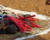 20150202 03 maisoras apeiga gvatemala afrika amerika (43)