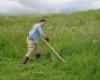 sienavimas dalgiu yra ekologiskiausias zoles pjovimo budas-K100