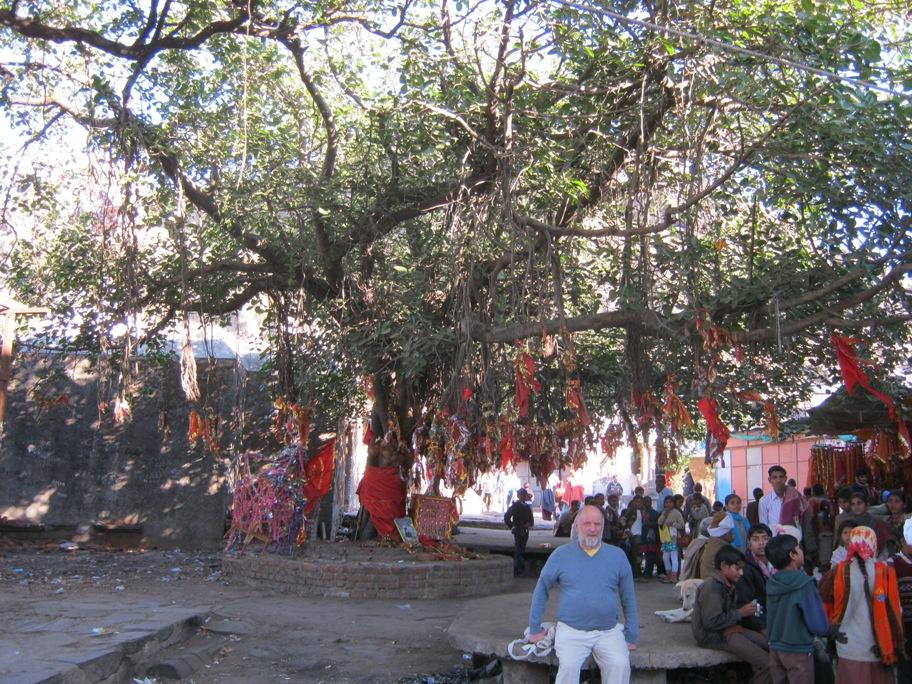 Aukų medis prie Mahakalikos šventyklos