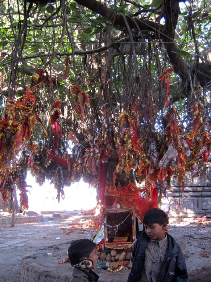 Aukų medis