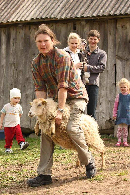 Kęstas Samušis veda avį kirpti