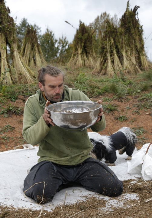 Baltijos pluoštinių augalų augintojų ir perdirbėjų asociacijos vadovai  Edgaras Babanovas (Edgar Babanov) iš kanapių sėklų išpučia pelus | V.Daraškevičiaus nuotr.