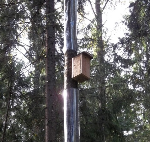 Plastikinės apsaugos nuo miškinių kiaunių | birdlife.lt nuotr.