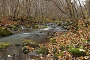 Dūkštos upelis | efoto.lt, A.Jomanto nuotr.