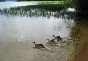 Platelių ežeras | efoto.lt, T.Bunkutės nuotr.