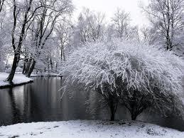 Parkas žiemą | A.Kėvalaitės nuotr.