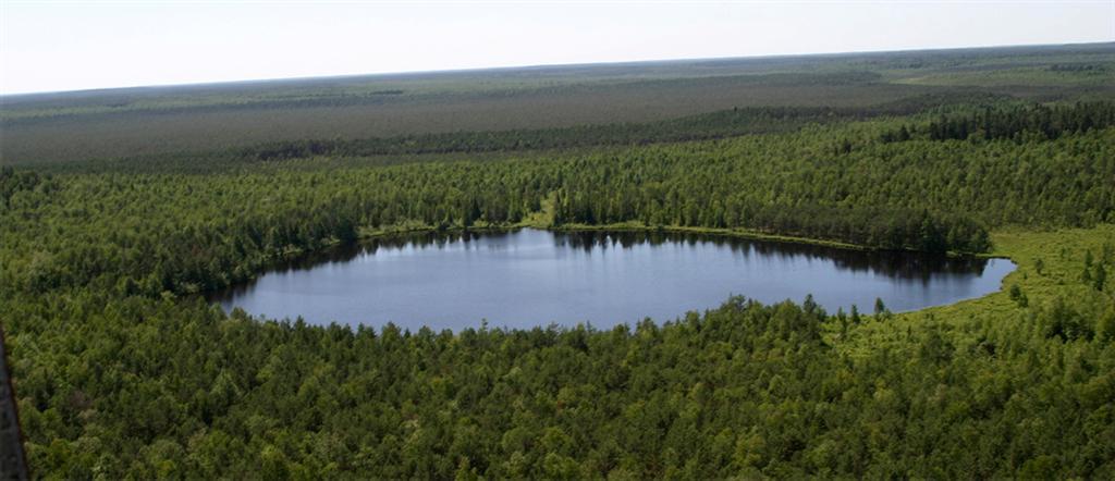 Viešvilės valstybinis gamtininis rezervatas