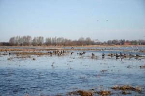 Paukščių karalija Nemuno deltos regioniniame parke