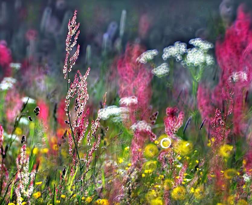 Vasaros žolynai | efoto.lt Edvardo nuotr.