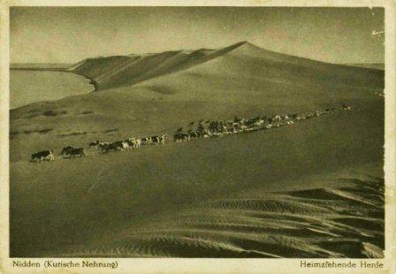Kuršių nerijos nacionalinio parko direkcijos archyvo nuotr.