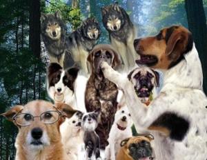 Susitarę šunys vilkus išpjaut | Alkas.lt, J.Vaiškūno nuotr.