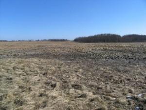 Buckūnų pelkė | Metelių regioninio parko direkcijos archyvo nuotr.
