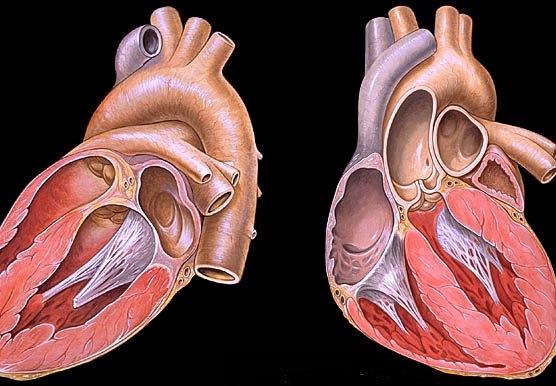 asprinas širdies sveikatai
