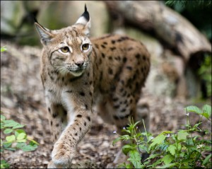 Dudley Zoological Gardens | J.Skarratt nuotr.