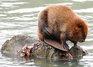 wildlifeanimalz.blogspot.com nuotr.