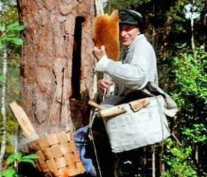 Kopinėjamas medus | gamta.cepkeliai-dzukija.lt nuotr.