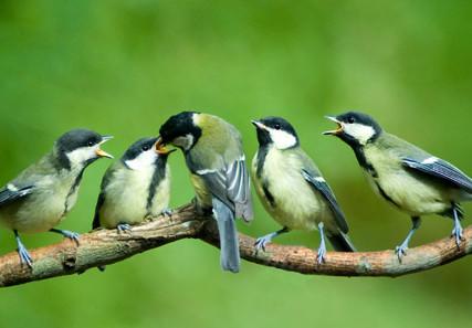 birds.com nuotr.