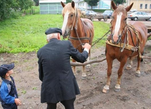 Lietuvos sunkieji arkliai | N.Petrošiūtės nuotr.