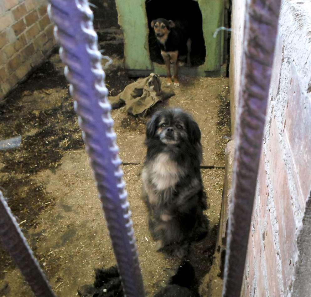 Gyvūnų globos namuose