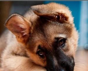Šuo | valstietis.lt nuotr.