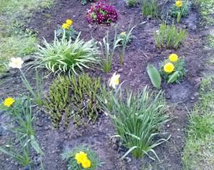 Mokiniai sodina gėles