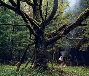 Lietuvoje yra 28 genetiniai ąžuolų draustiniai, kurie padeda atkurti genetiškai vertingus ąžuolynus | raila.lt nuotr.