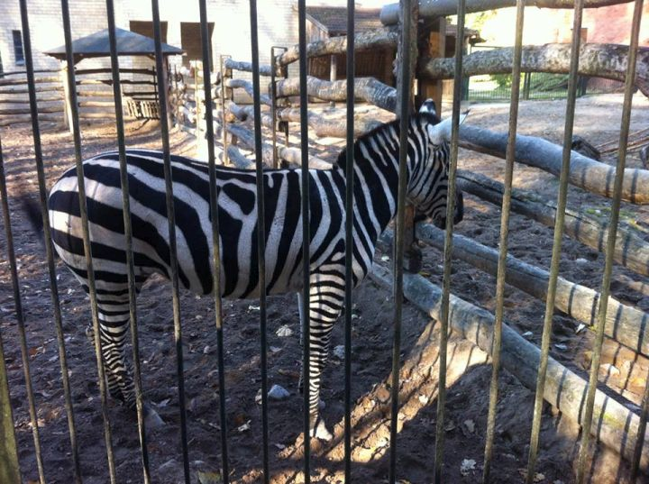 Vilniaus zoologijos sodas