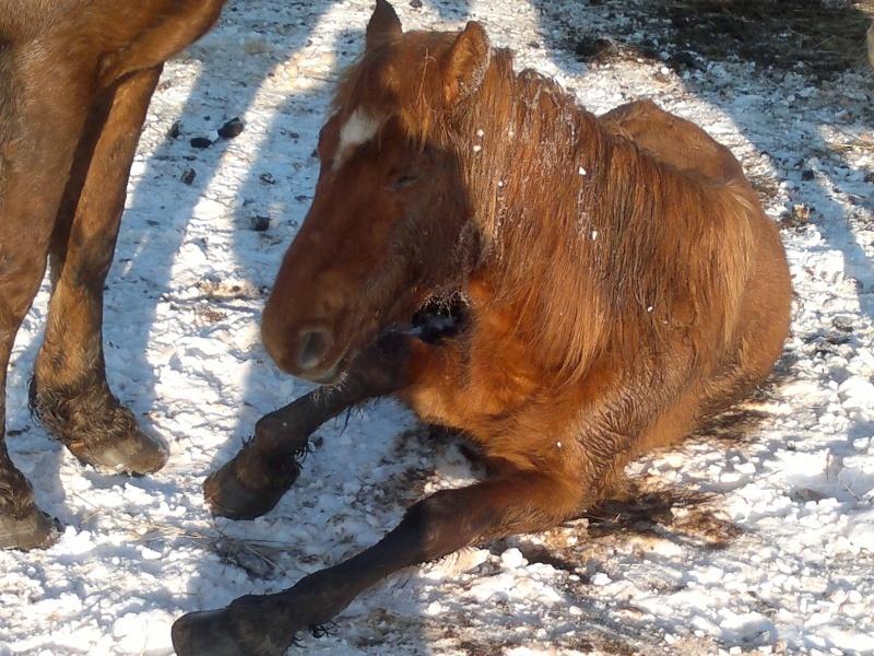 Neprižiūrėti žemaitukai buvusiame A.K. ūkyje | zirgugloba.lt nuotr.