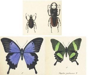 Vabzdžių piešiniai, aut. V. Straševičius.