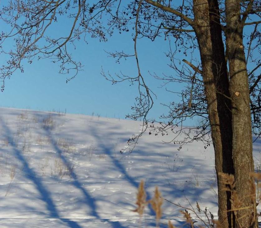 Žiemos šešėliai | Alkas.lt,  V.Vaiškūnaitės nuotr.