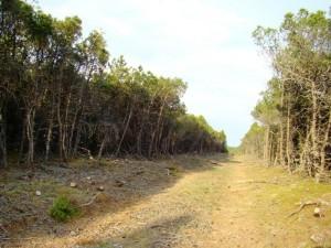 Kalnapušės Kuršių nerijoje jau pasiekusios brandą | Kuršių nacionalinio parko direkcijos nuotr.