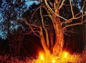 ugnis.pavaslygiadienis Neries parke