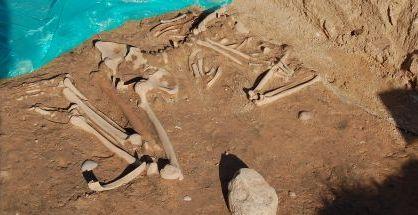 Neolito kapavietė. Biržų sav. nuotr.