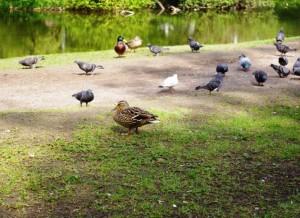 Paukščiai | alkas.lt, A.Rasakevičiaus nuotr.