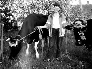 Karvės per Sekmines, apie 2005 m. Darsūniškis, Kruonio seniūnija. Nuotrauką pateikė Vytautas Lapinskas iš Darsūniškio | kaisiadoriumuziejus.lt