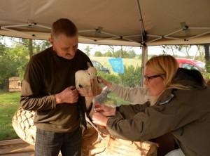 Salantų regioninio parko vyr. ekologė Asta Bagočienė žieduoja gandrą