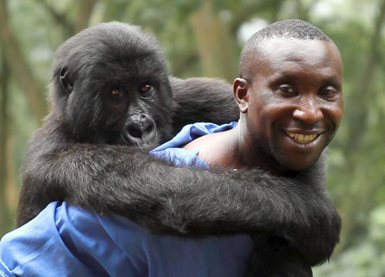 """Kadras iš O. V. Einsiedelio filmo """"Virunga"""" ( Didžioji Britanija)"""