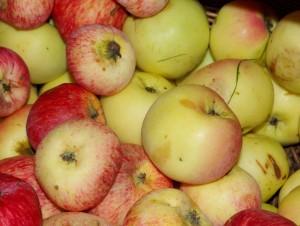 raudoni obuoliai1-K100