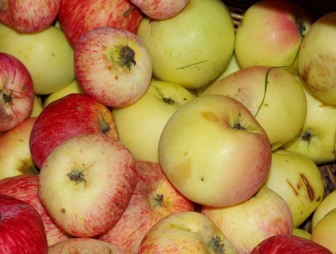 Raudoni obuoliai   Vingailės Vaiškūnaitės nuotr.