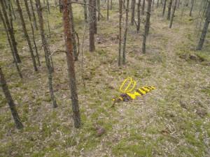 Žemės menas – miško bitė | Kauno regioninio parko direkcijos nuotr.