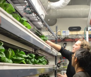 maistas labaratorijoje_mitcityfarm.media.mit.edu