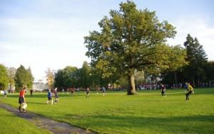 Europos medis 2015 auga Saaremaa saloje | Kalmer Saar nuotr.
