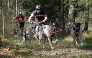 Šunų kinkiniai | rengėjų nuotr.